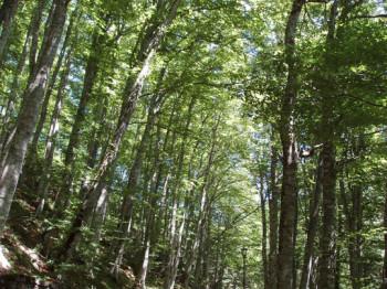 foresta-la-verna