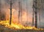 mancano-i-fondi-e-la-volonta-di-attuare-un-piano-di-prevenzione-incendi-in-sicilia-1