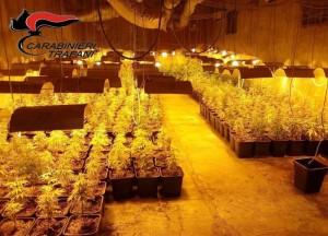 Droga: serra di canapa nel Trapanese