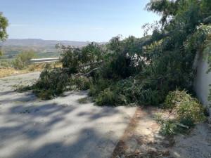 albero-caduto-su-sp61